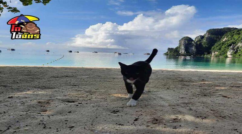เกาะพีพีแมวได้ยึดไว้หมดแล้ว !!